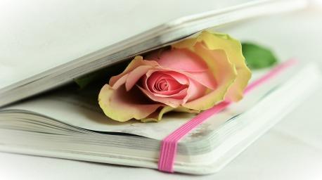 rose-764267_1920